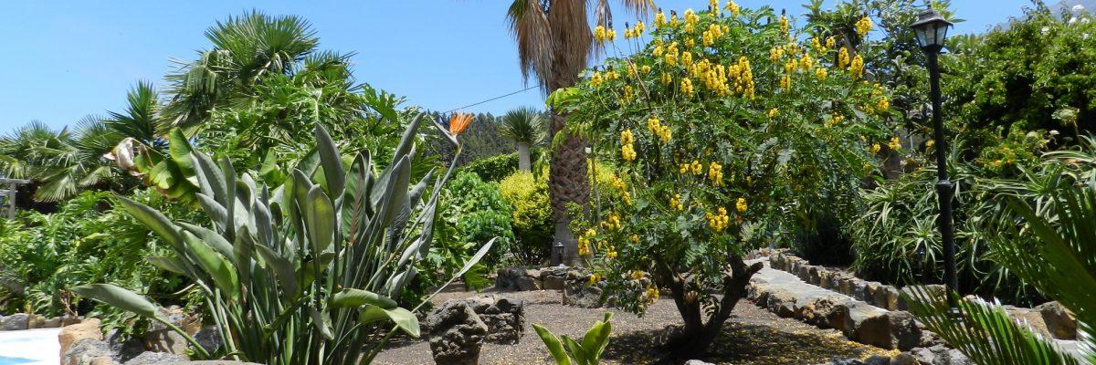 Canaries Tenerife Icod de los Vinos 18671
